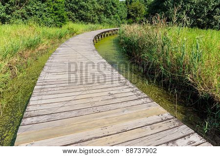 Wooden Bridge in jungle