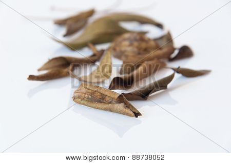 Pile Dried Leaves Isolated On White Background