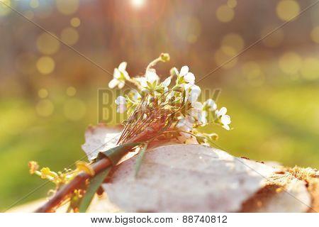 Sunrise Wildflowers