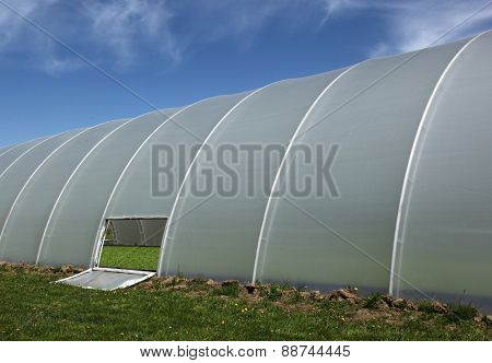 Plastic tunnel greenhouse with young plants inside