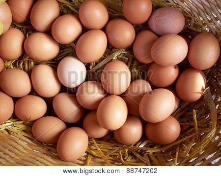 Fresh Organic Brown Eggs