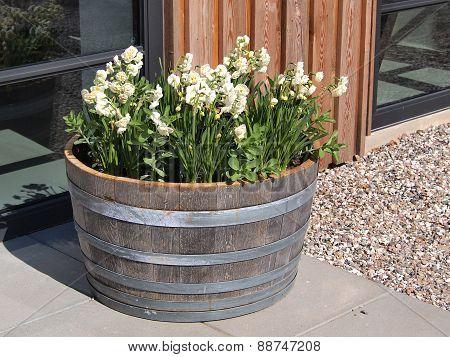 Bunch Of White Flowers In Wooden Barrel