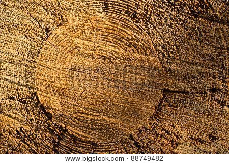 Cross Section Of The Tree Trunk