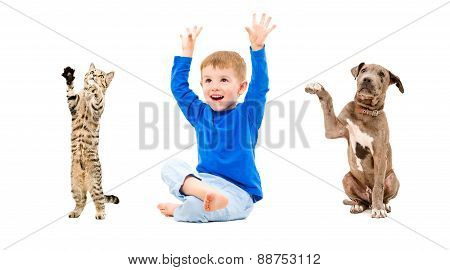 Joyful boy, cat and puppy