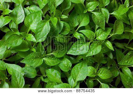 Seedlings Closeup