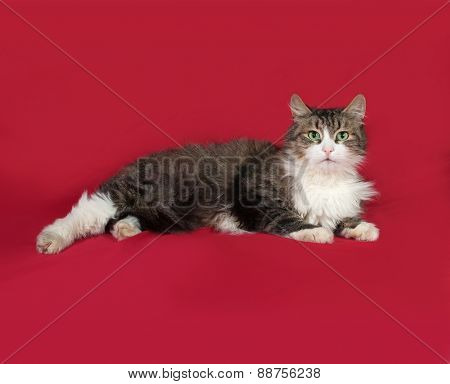 Fluffy Tabby And White Cat Lying On Red