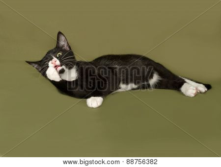 Black And White Kitten Licking On Green