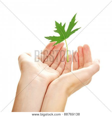Female hands with green leaf isolated on white