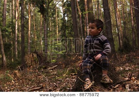 Little boy sitting on a tree stump in the woods