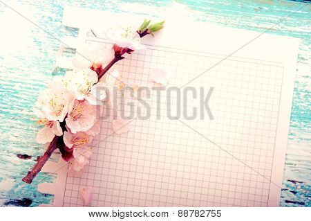Wedding background. Flowering branch of cherry and paper
