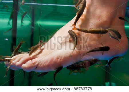 Doctor fishes nibble at a foot