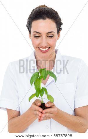 Scientist holding basil plant on white background