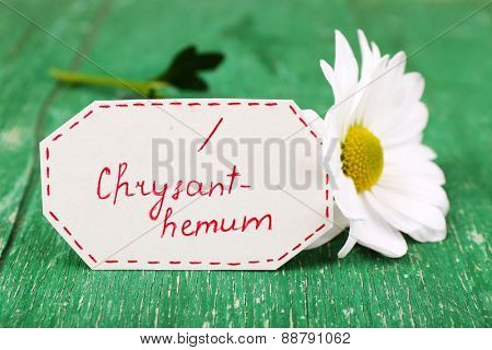 Beautiful chrysanthemum with tag on wooden background