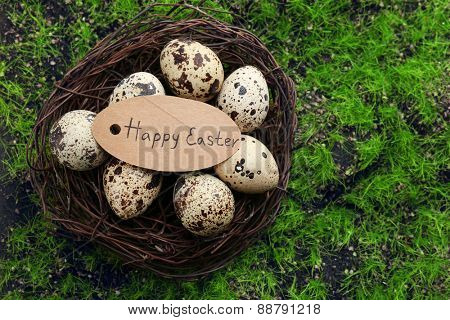 Bird eggs in nest on green grass background
