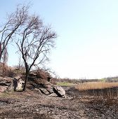picture of shale  - Burnt cane and desolation on the dry riverbed in shale rocks - JPG