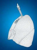 pic of bronchus  - Concept or conceptual anatomical human man 3D wireframe mesh respiratory system  with lungs on blue background - JPG