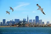 pic of flock seagulls  - A flock of seagulls flying over the bay on the background of San Francisco - JPG