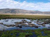 stock photo of hippopotamus  - A herd of hippopotamus in a water hole in Ngororo Crater - JPG