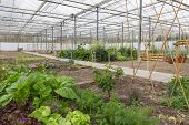 picture of greenhouse  - Dutch Greenhouse with several small vegetable gardens - JPG