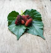 image of mulberry  - Fresh organic mulberry Focus on fruit of mulberry - JPG