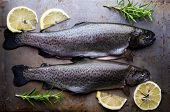 foto of brook trout  - trout on metal table with lemon and rosemary - JPG