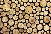 stock photo of cutting trees  - Background made of cut and stacked trunks of trees  - JPG