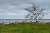 stock photo of windy  - Lonely Leafless Tree at Seashore in Windy Weather - JPG