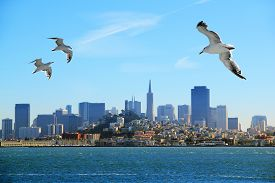picture of flock seagulls  - A flock of seagulls flying over the bay on the background of San Francisco - JPG