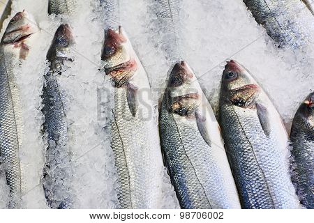 Fish On Ice In Supermarket Store