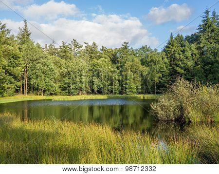 Peaceful, Golden Sunlight On Dutch Lake