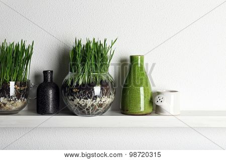 Transparent pots with fresh green grass on shelf
