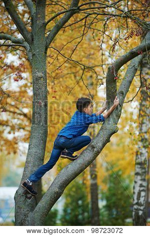 boy climbs up the tree in park