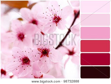 Blooming tree twigs with pink flowers and palette of colors