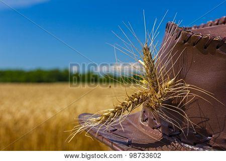Wheat Ears On Farmer's Hat.