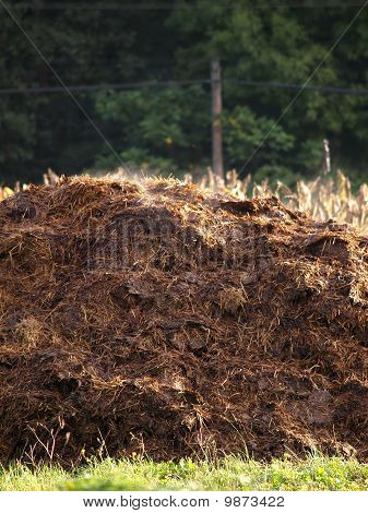 Cow Manure Heap