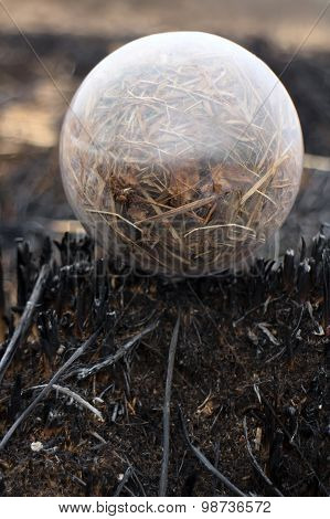 Global Concept Early Spring Fires And Burnt Grass