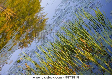 Grass and tree reflections