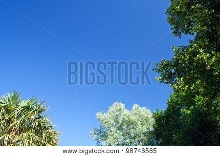 Tree Framed Clear Blue Sky