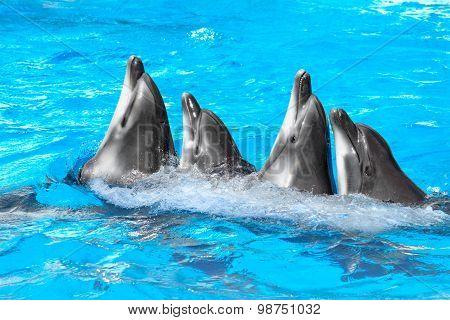 Dolphins Dance Lambada