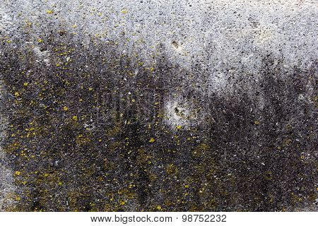 Concrete Surface With Yellow Moss And Rich And Various Texture