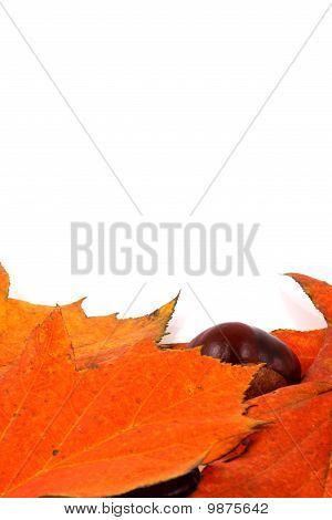 Autumn Fall Leaves