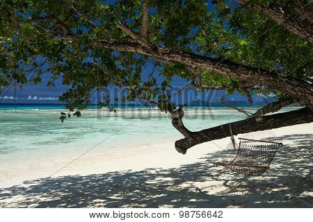 Tropical Coast With Hanging Branch Of Tree. View Of The Sea