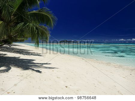 Tropical Beach With Hanging Palm Trees. View Of The Sea