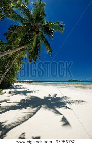 Coconut Palm With Shadow On Sandy Beach
