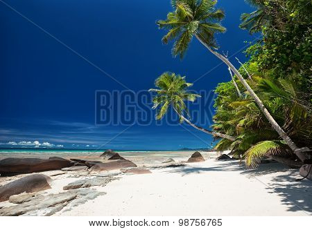 Coconut Palm Trees On The White Sandy Beach