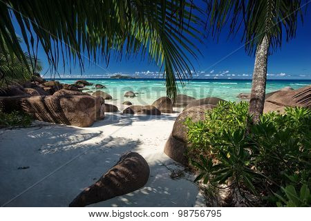 Green Trees On A White Sand Beach With Boulders