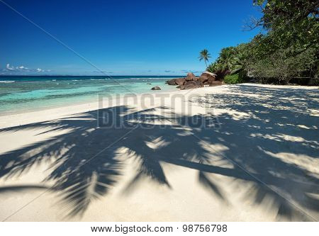 Beautiful Tropical Sandy Beach With A Shadow Of The Coconut Palm Trees