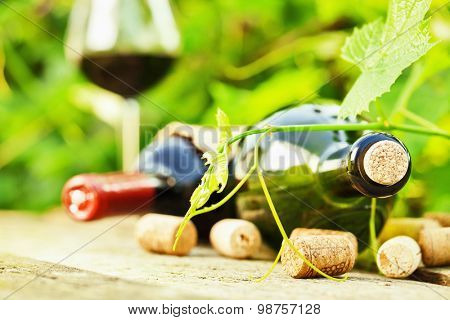 Wine bottle with a vine closeup on wooden background