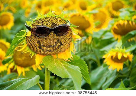 Sunflower With Glasses And A Smile