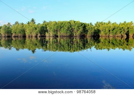 Mangrove Forest Topical Rainforest
